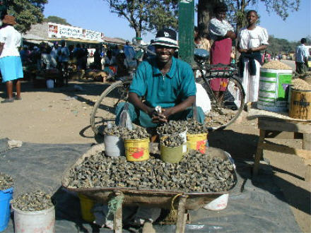 http://www.questconnect.org/images/mopani_vendor.jpg